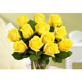 12 Yellow Ecuadorian Roses