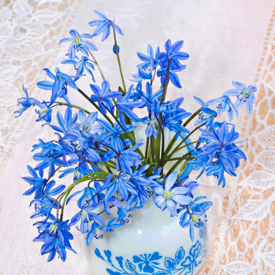 bluebell flowers for mothers day philippines